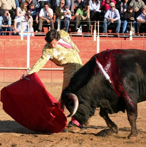 El toro, todo un TÍO,  se desplazó con celo ante la muleta de Solís.