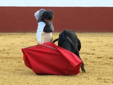Solís con la derecha llevando muy toreada a la vaca.
