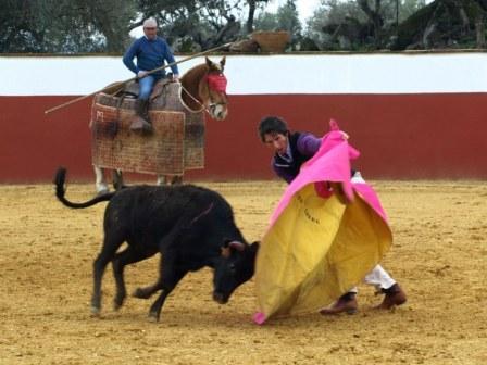 Es Javier Ambel el que saca a la vaca del peto y la vuelve a colocar en suerte.