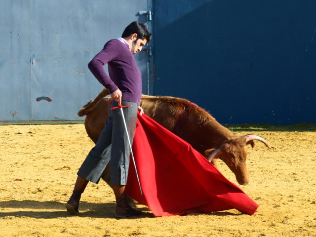 ...con garra y clase, esa firmeza en la mirada, esa planta de torero... Alejandro danzando en el campo...