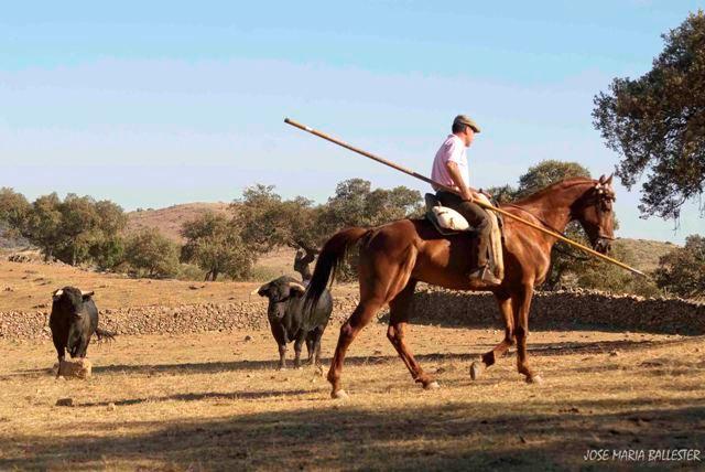 Ante estos animales todos los movimientos han de ser pausados, tanto a pie como a caballo.