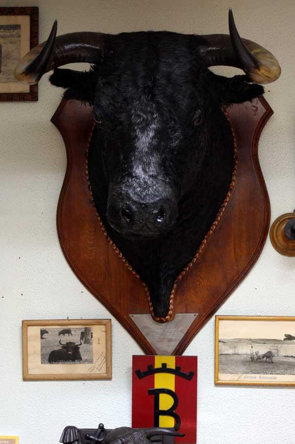 Fosforero', semental de la ganadería del Vizconde, que sembró de bravura 'Los Colmenares