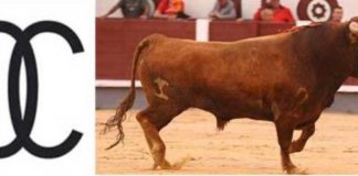 'Clarinete' último astado de los anunciados en cartel de la ganadería de Carriquiri en Las Ventas. (FOTO: Juan Pelegrín/Las Ventas.com)