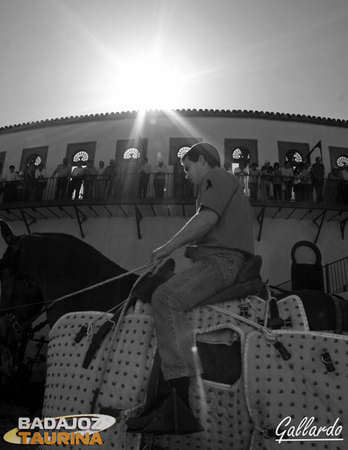 Hasta el sol quiso sumarse a la expectación del patio de caballos.