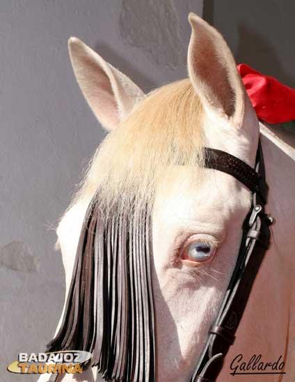 La mirada de un albino.