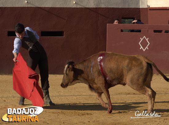 Por uno y otro pitón entendió a la perfección al ganado.