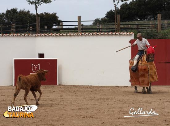 La vaca arrancándose al caballo de Juan, el mayoral.
