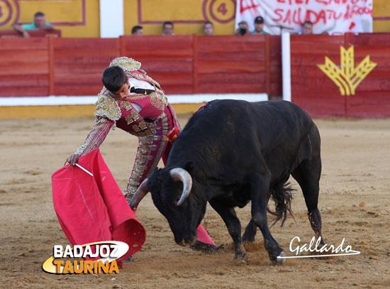 Alejandro Fermín tirando de su novillo. (FOTO: Gallardo)