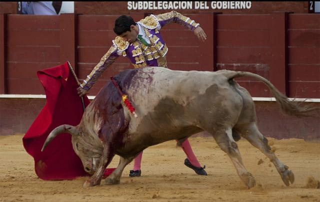 Talavante interpretando su pase más genuino a 'Enemigo' en el ruedo de La Malagueta. (FOTO:Joaquín Bueno-mundotoro.com)