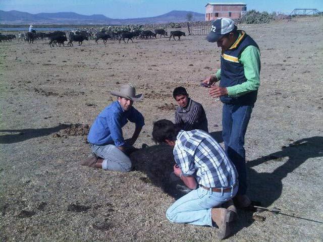 Ataviado con sombrero texano ayudando en labores de herrado. (FOTO: CEDIDA)