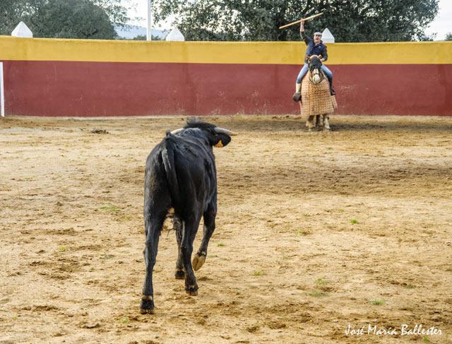 Guillermo Marín llamando a la vaca...