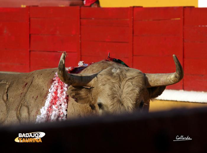 El toro de la discordia