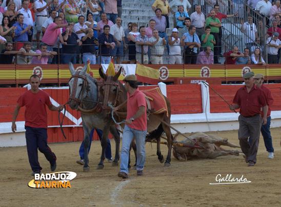 Vuelta a un toro de Cayetano Muñoz lidiado en Mérida en 2012 (FOTO: Gallardo)