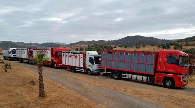 La famosa foto de los camiones saliendo de Los Bolsicos (@mulillero)