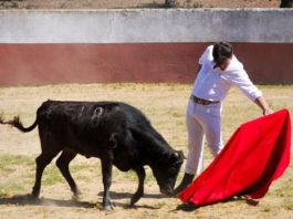 Luis Domínguez tentando para los socios de la Peña 'Media Verónica' de Herrera del Duque