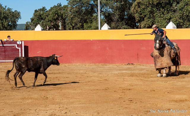 Álvaro Marrón tirando el palo a una vaca