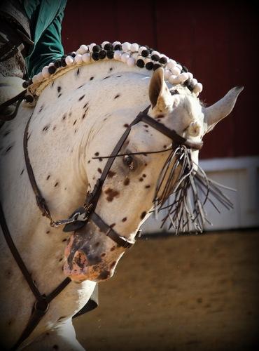 Pintas, un caballo que no necesita extras para lucir