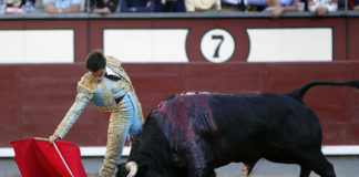 Fernando Flores expresando su toreo en Las Ventas ante el 'doloresaguirre'