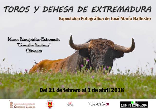 Toros y dehesa Extremadura