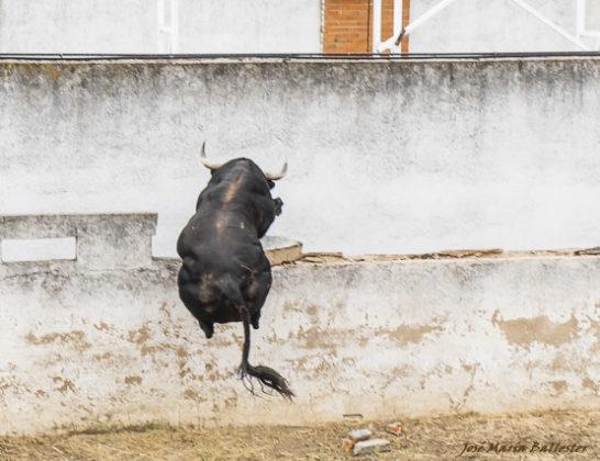 Momento en el que salta