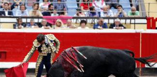 Antonio Ferrera muleteando al ejemplar de El Parralejo en Bilbao (FOTO: Arjona-Aplausos.es)