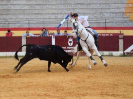 Adrián Venegas entrenando con una vaca en la plaza de Almendralejo FOTO: Rivera